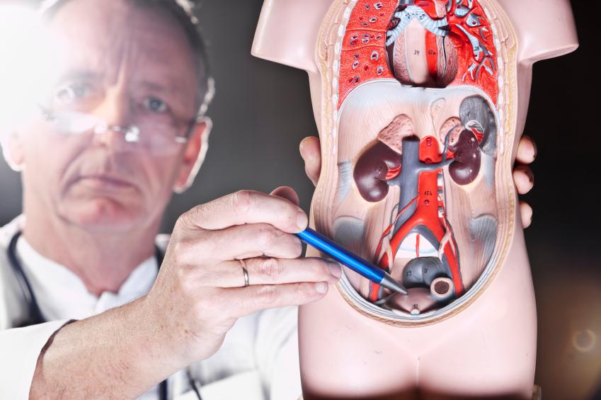 Простатит кто лечит врач сиалис и лечение простатита