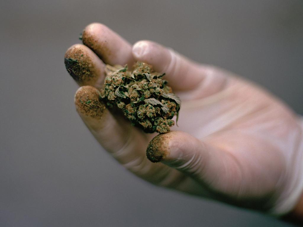 Как часто можно курить марихуану без вреда kravz друзья марихуаны